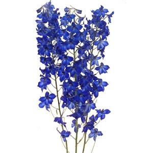 bulk wholesale larkspur