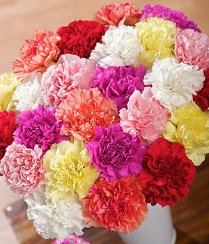 Wholesale Flowers Carnations Las Vegas