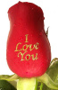 100 '' I Love You '' Roses ($3.85per stem)