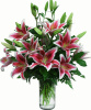 Pink Lilies for MOM
