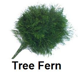 Tree Fern $6.99 (buy minimum 5 bunches)