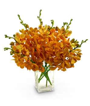 Orange Mokara Orchids ( 70 stems/ 2.67 per stem)