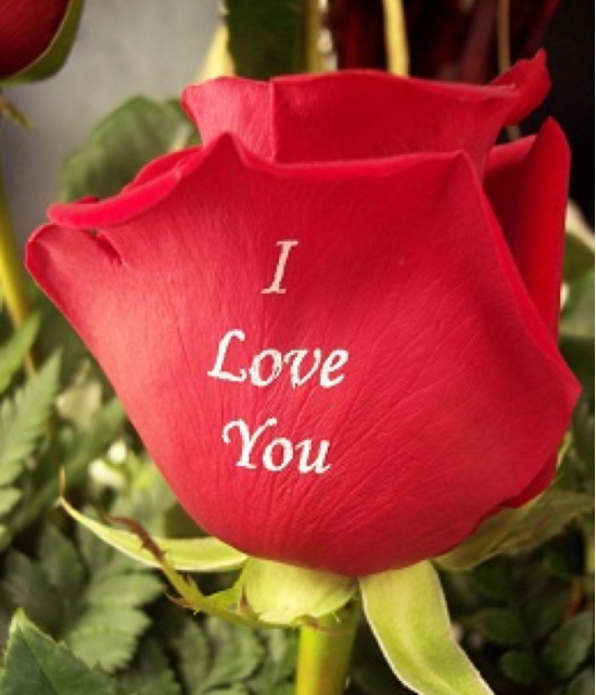 I Love You Personalized Roses