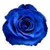 100 Tinted BLUE Roses ($2.88 each)