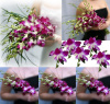 Purple Dendrobium Orchids Wedding Package