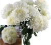 80 Mum Football White ($1.86 per stem)