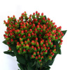 Hypericum Berries Flower Bunch ($0.89 stem)